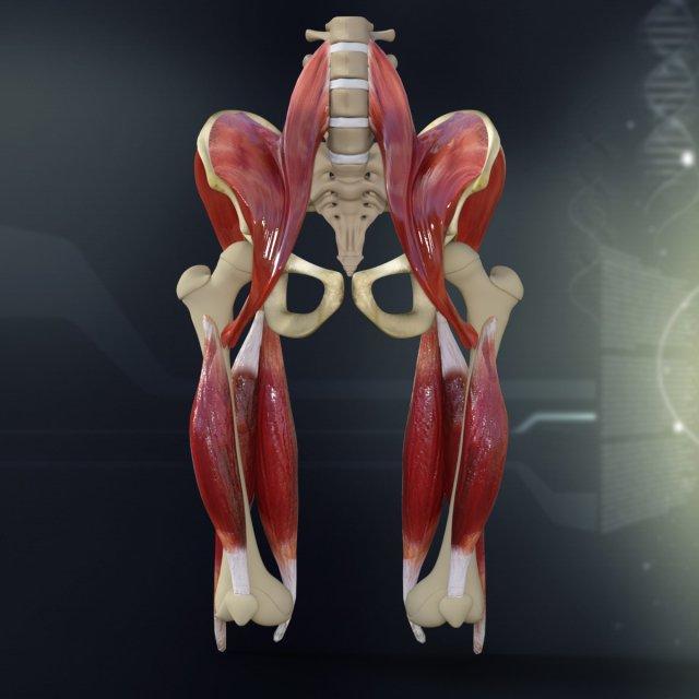 Anatomy tablet | Wind roller