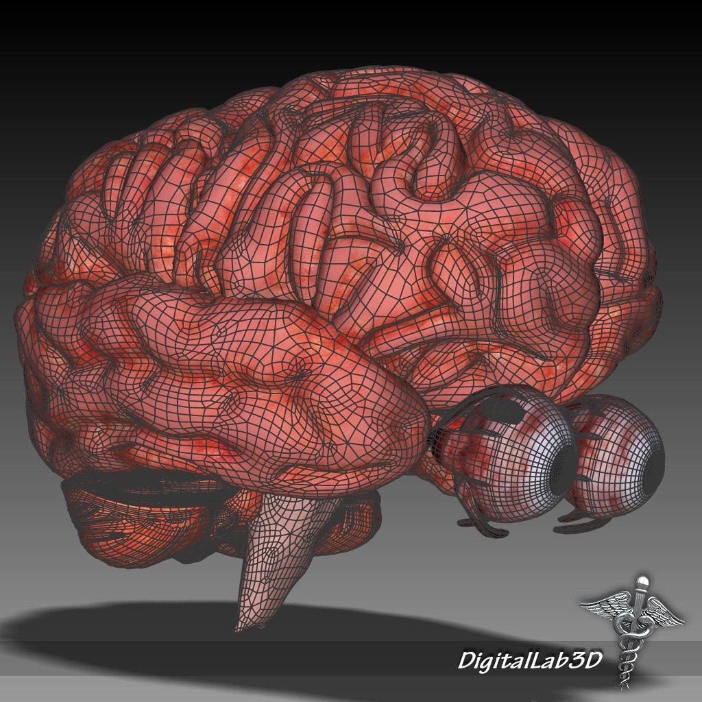 Eye and Brain 3D Model in Anatomy 3DExport