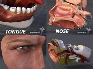 Human Four Senses Collection