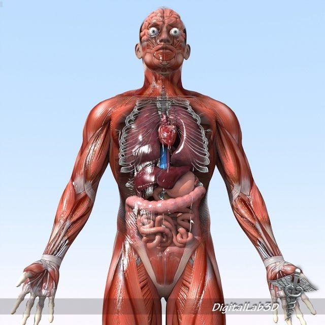 Human Male And Female Anatomy 3d Model In Anatomy 3dexport