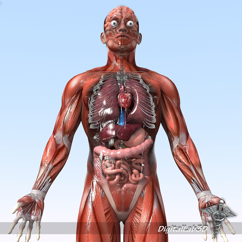 Collection Rigged Human Male And Female Anatomy 3d Modell In