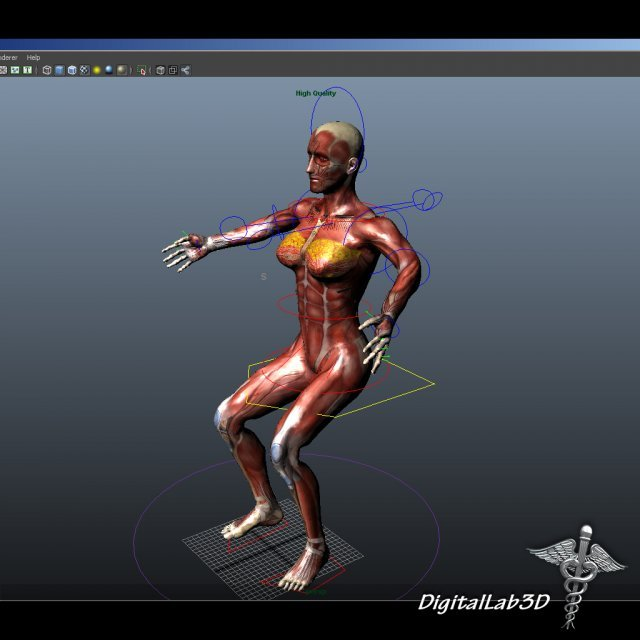 Rigged - Human Female Anatomy 3D Model in Anatomy 3DExport