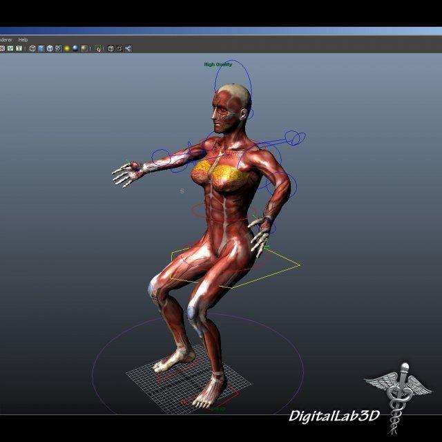 Rigged - Human Female Anatomy 3D Model in Anatomy 3DExport