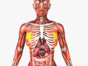 Rigged - Human Female Anatomy