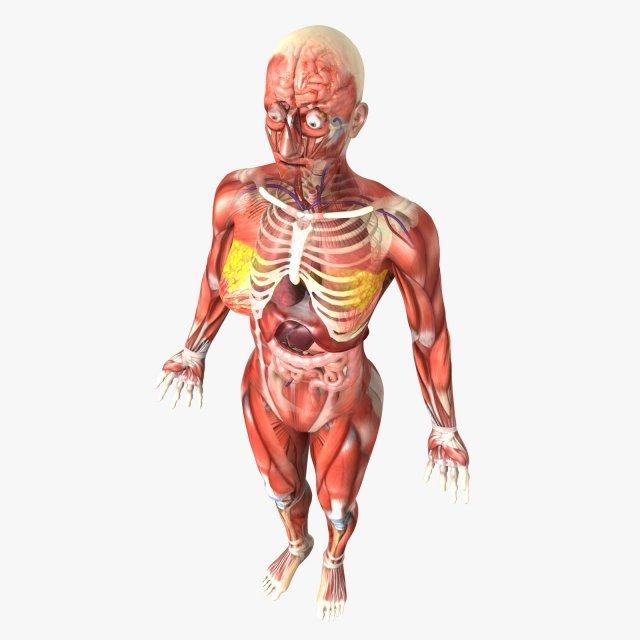 Human Female Anatomy 3d Model In Anatomy 3dexport