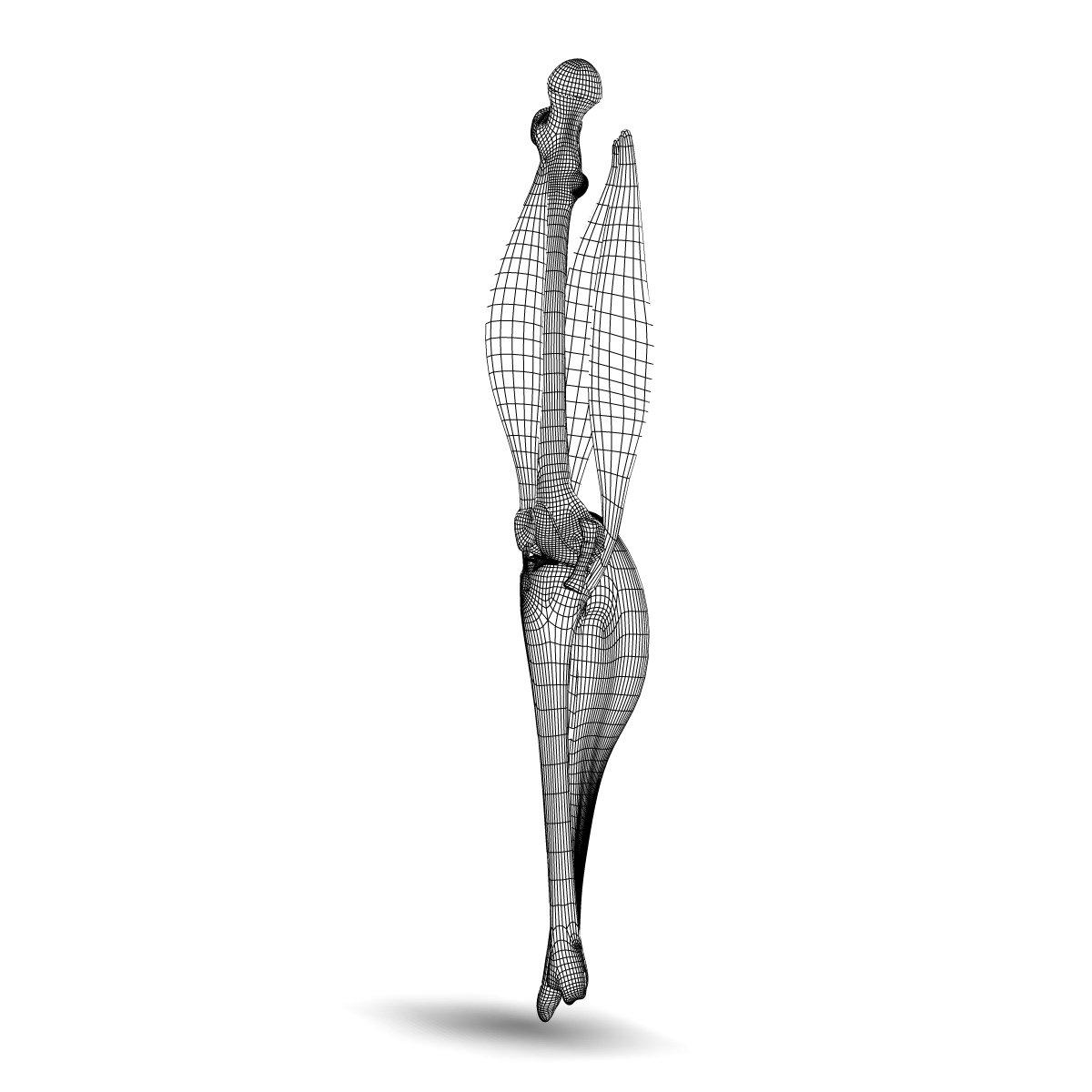 Knee Joint Anatomy 3D Model in Anatomy 3DExport