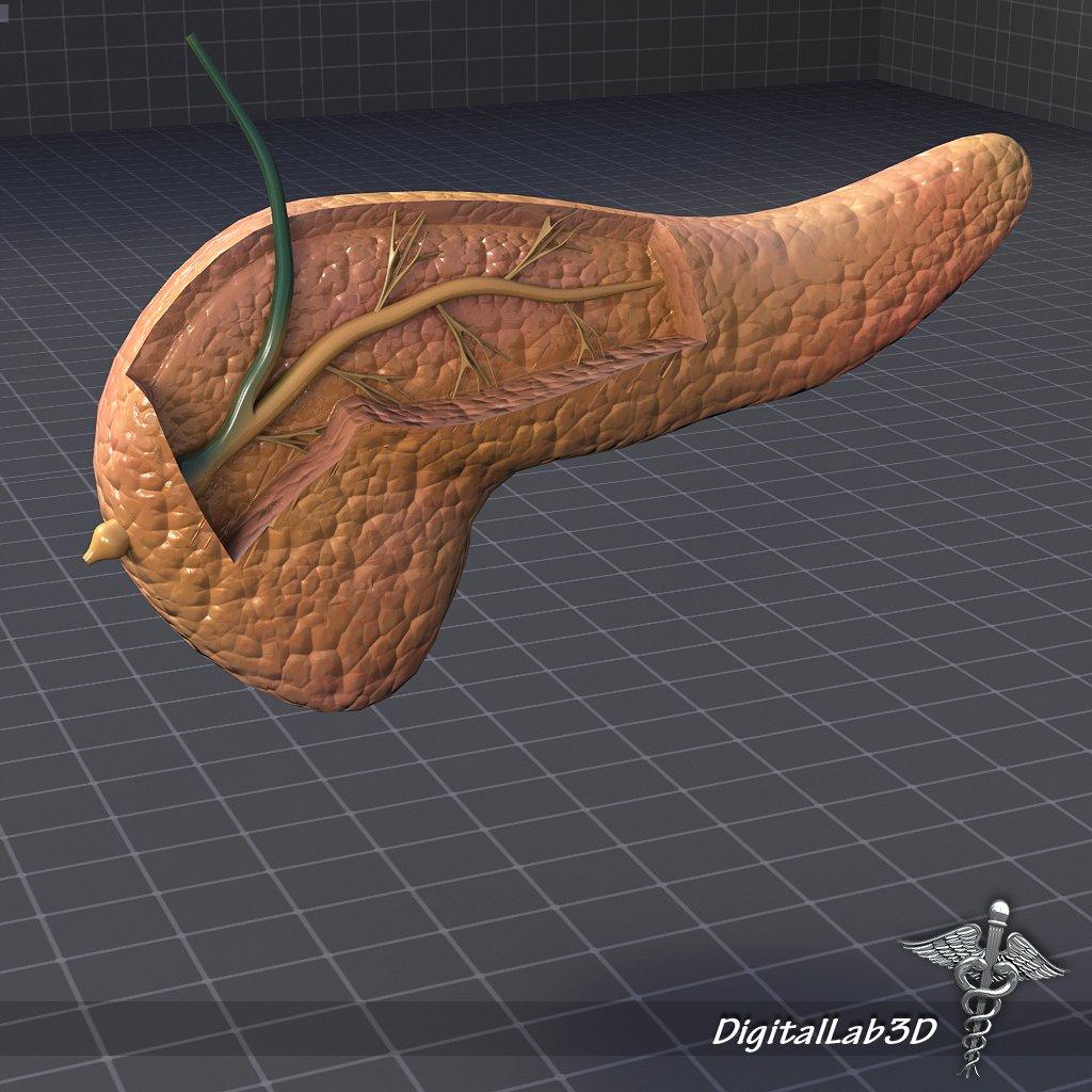 Pancreas Anatomy 3d Model In Anatomy 3dexport