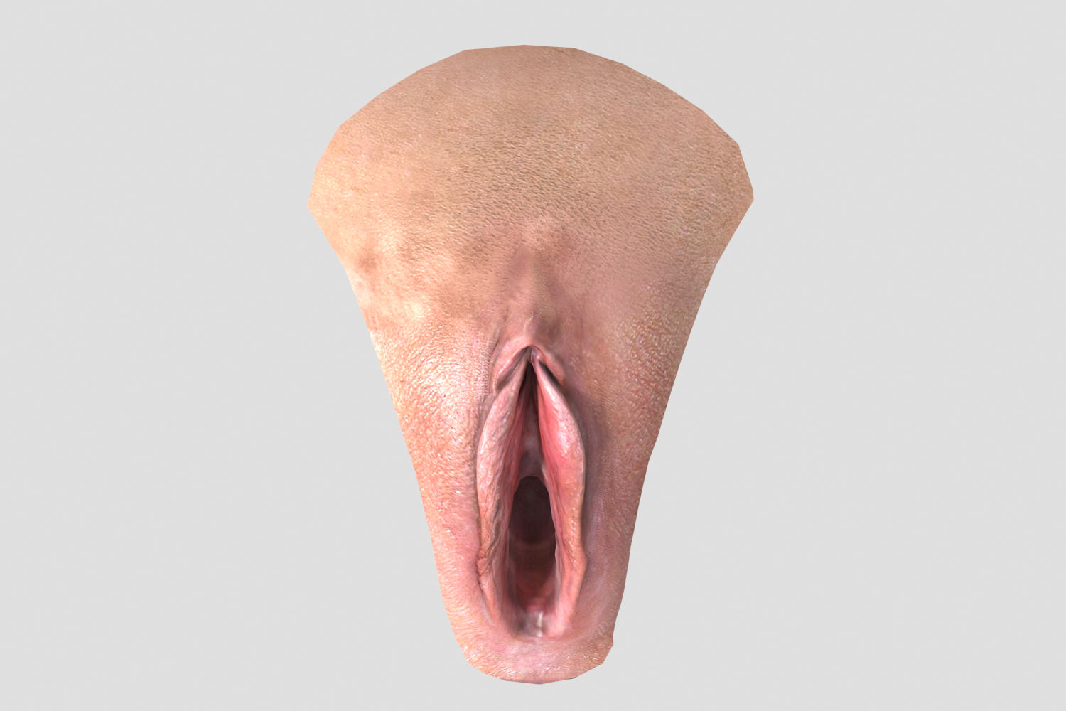 Animation Female Vagina 3d Model In Anatomy 3dexport