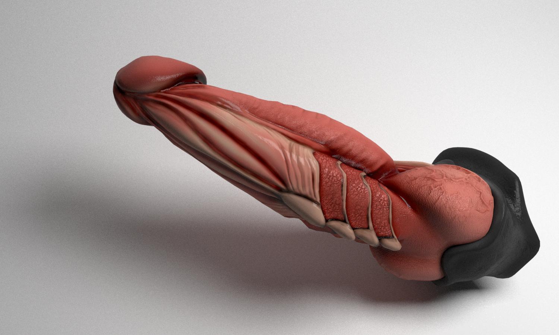 Wie groß ist Drachen Penis