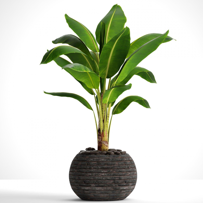 Banana Tree 3d Model In Bush 3dexport