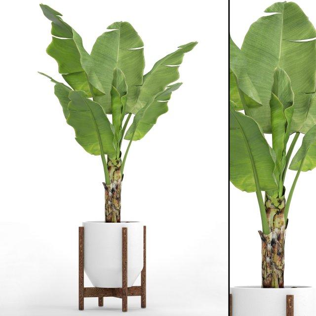 Banana Tree 3d Modell In Baum 3dexport