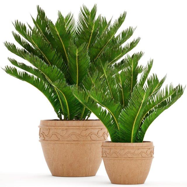 Cycas palm tree 3D Model in Bush 3DExport
