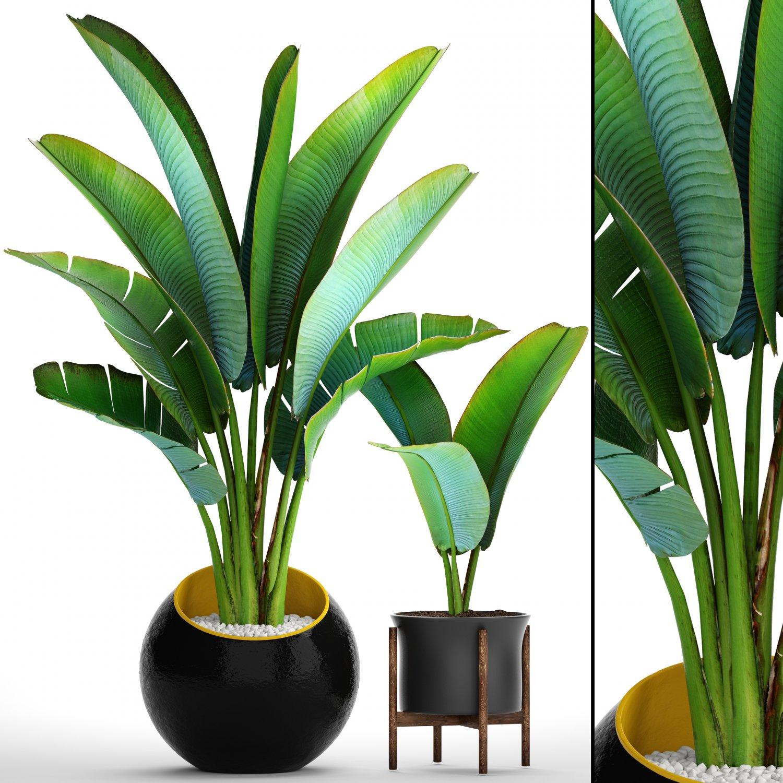 Palm Plants 3d Model