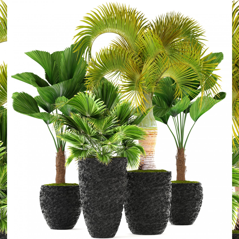 Palms 3D Model in Tree 3DExport