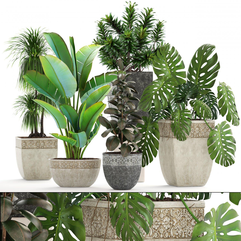 Collection plants 3D Model in Flowers 3DExport