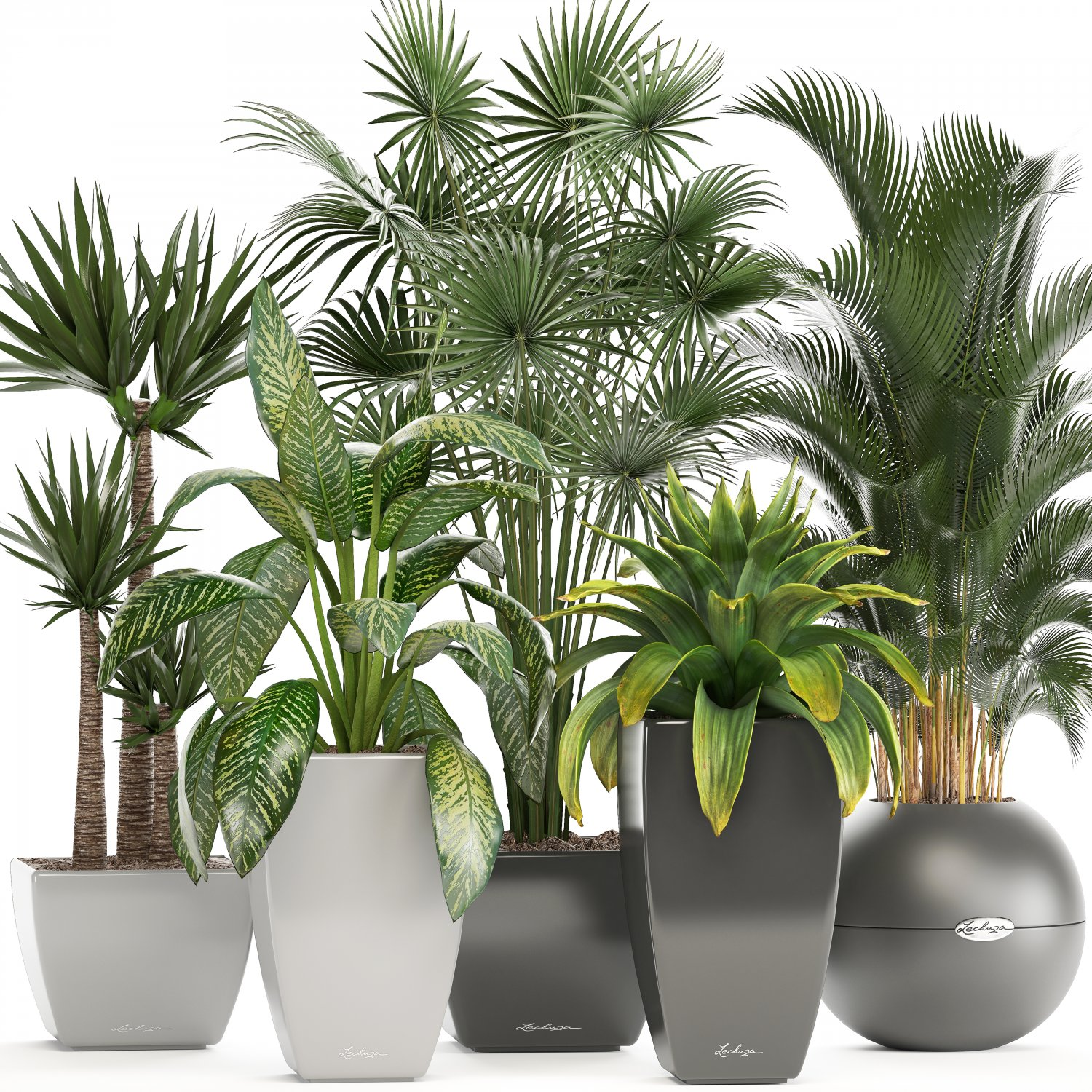 Collection Of Plants In Pots Model 3D