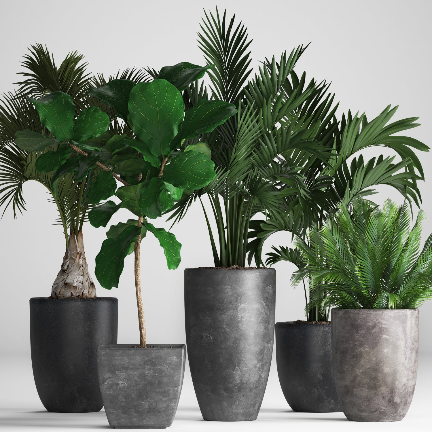 Collection Exotic plants 3D Model in Small Plants 3DExport