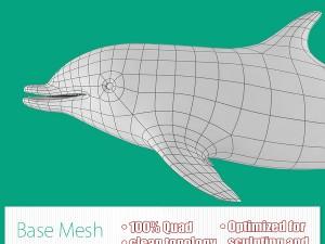 Dolphin Base Mesh