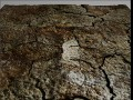Ground Earth Texture