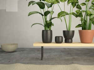 The Plants