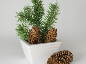Christmas fir branches and cones
