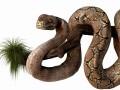 Anakonda Snake Realistic High Poly