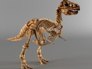 Dinosaur a skeleton