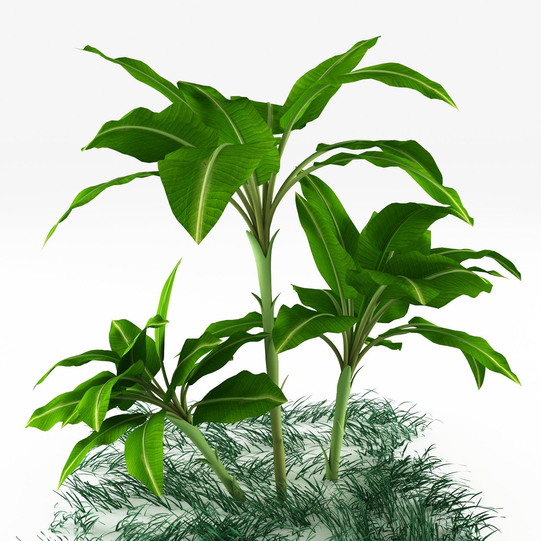 Exotic plants 3D Model in Tree 3DExport