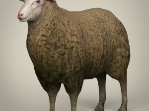 Low Poly Realistic Sheep