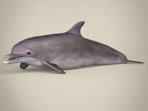 Low Poly Realistic Dolphin
