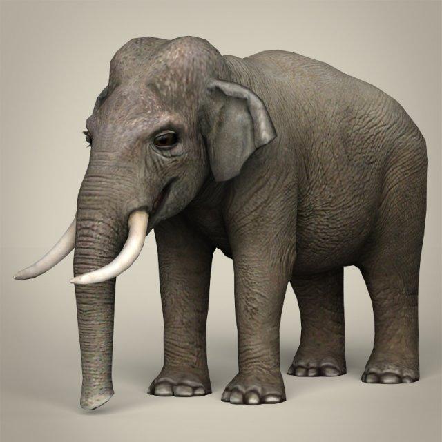Андрей Чайник, слон модель 3д макс анатомо-физиологические особенности ОДА