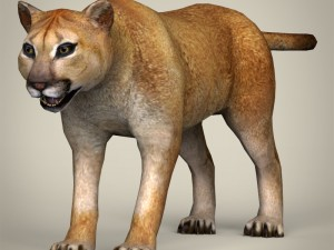 Low Poly Realistic Mountain Lion