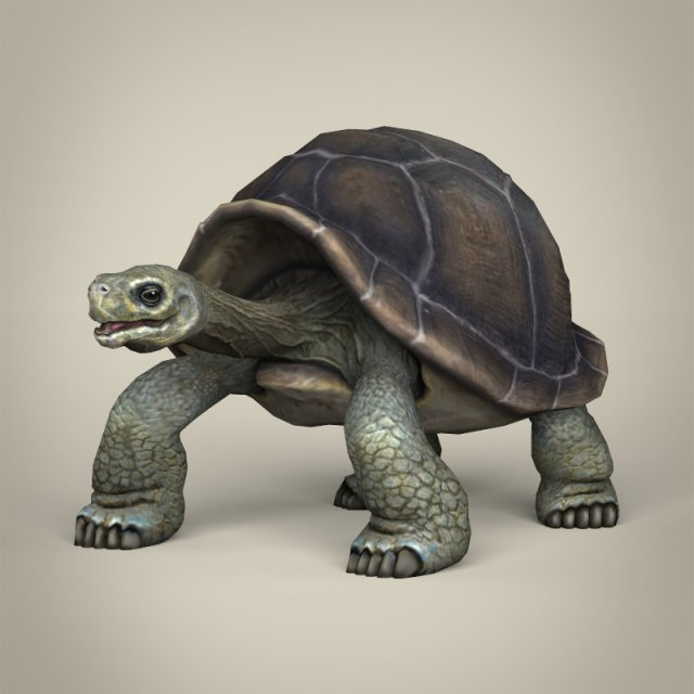 Low Poly Realistic Tortoise 3D Model