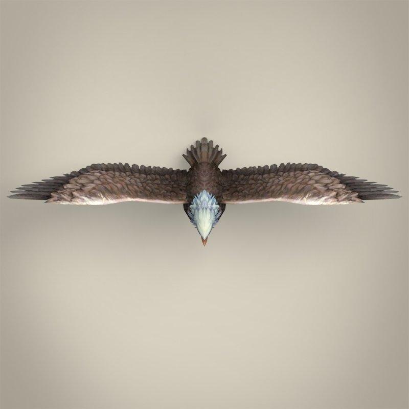 Low Poly Realistic Eagle 3D Model in Bird 3DExport
