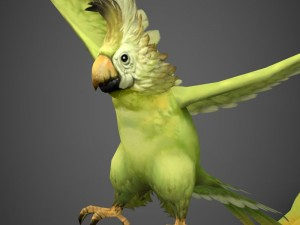 Game Ready Parrot