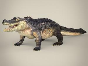 Realistic Crocodile
