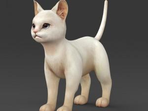 Game Ready White Kitten