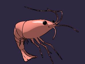 Rigged low poly shrimp for animation in Blender