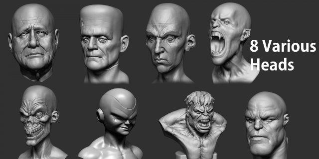 Various Heads 3D Model