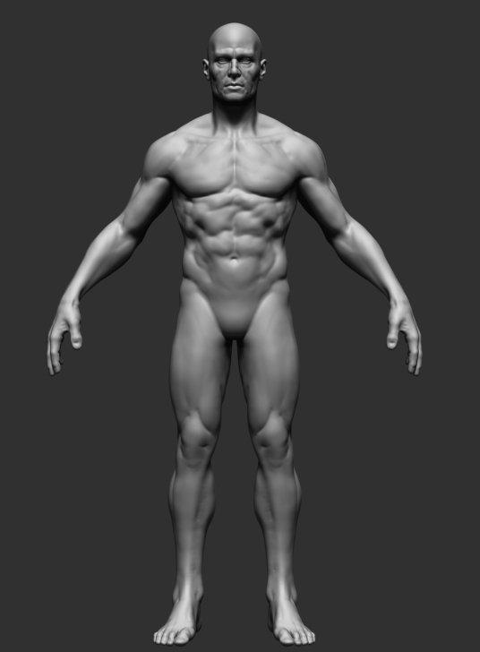Male Anatomy 3D Model in Man 3DExport