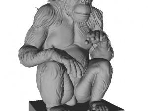 Chimp Printable