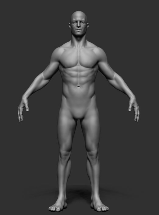 Male Anatomy v2 3D Model in Man 3DExport