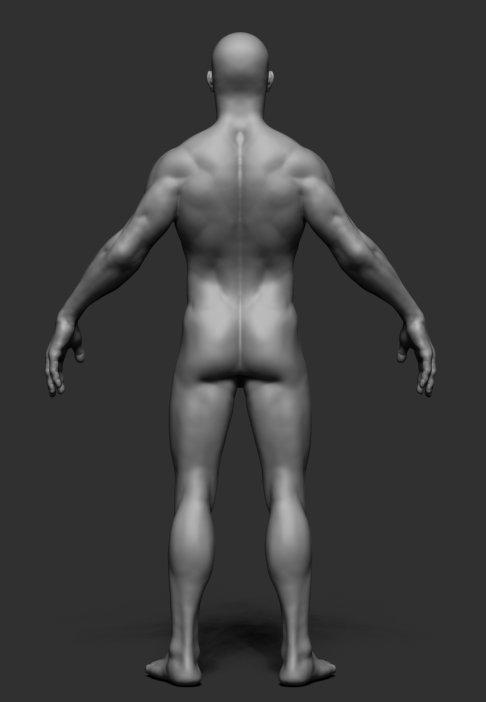 Male Anatomy v2 3D Model in Man 3DExport