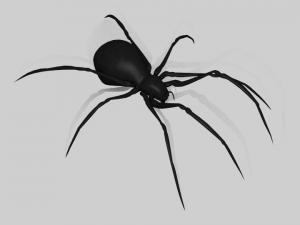 Black Widow Spider RIGGED