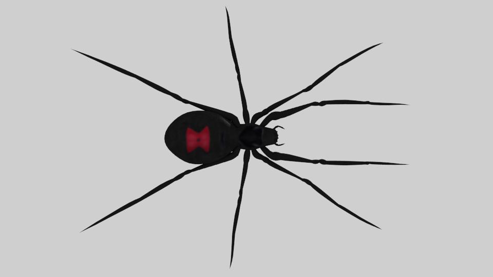 Black Widow Spider RIGGED 3D Model in Spider 3DExport