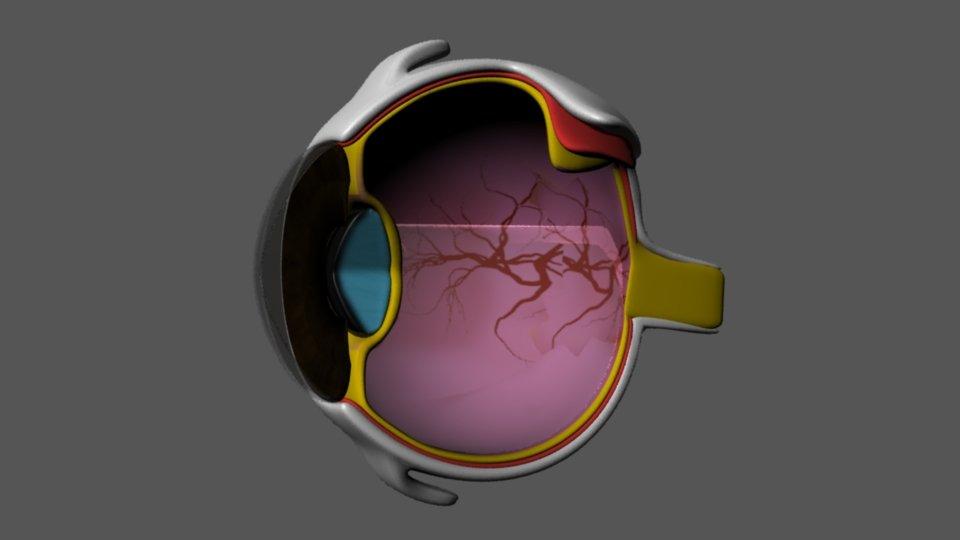 Eye Anatomy 3d In 3dexport