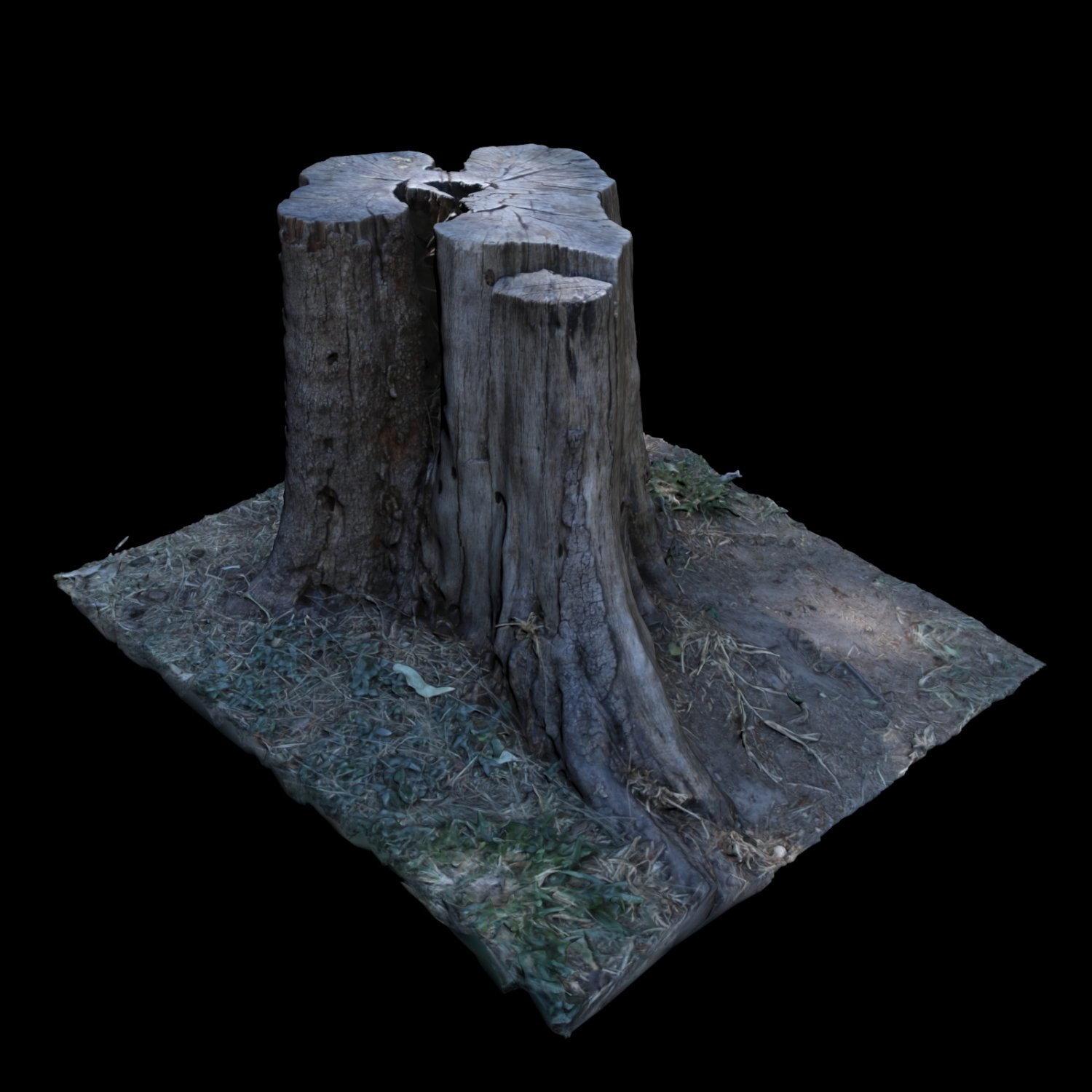 Trunk 3D Model in Tree 3DExport