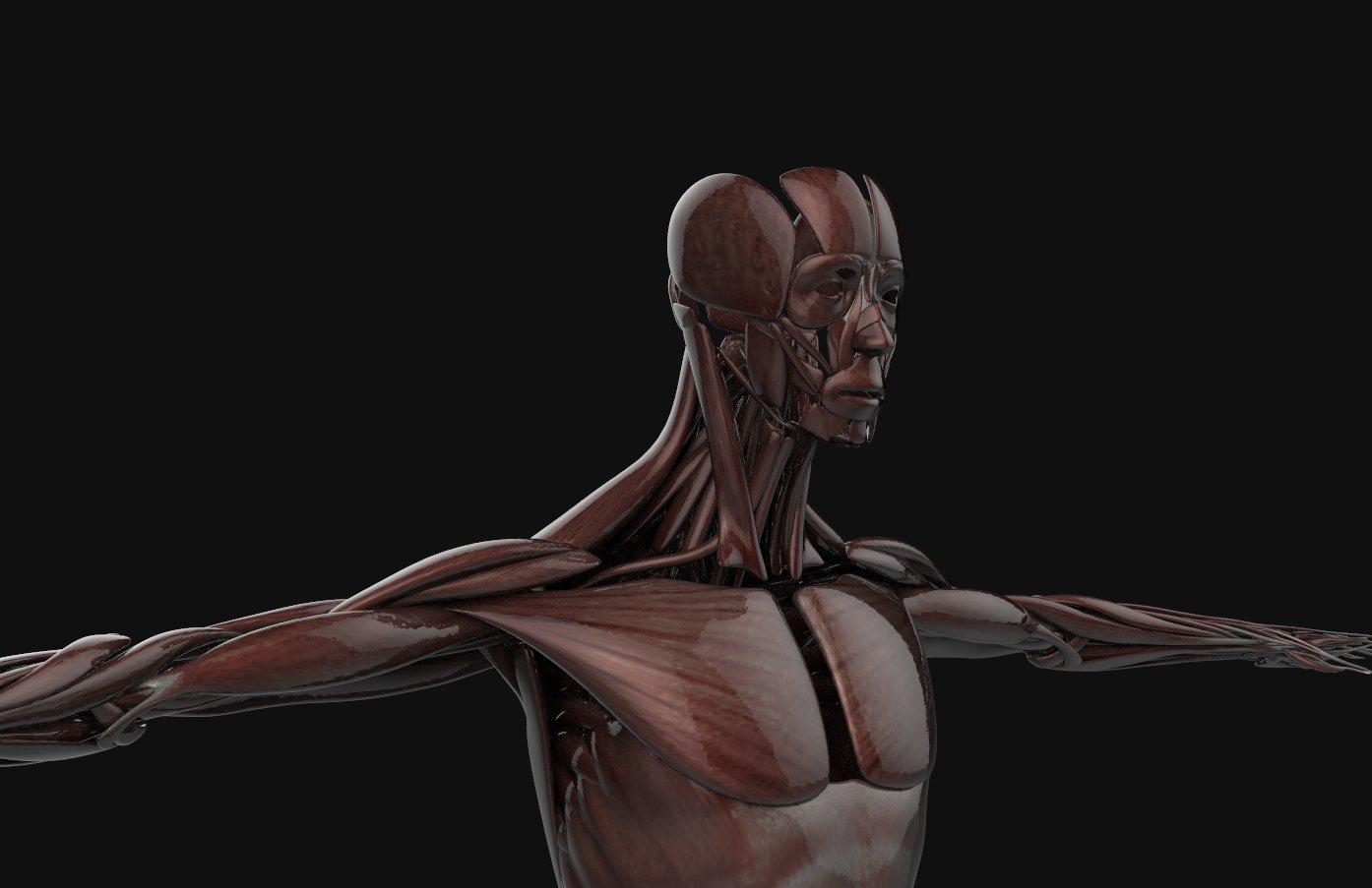 Complete human anatomy 3d