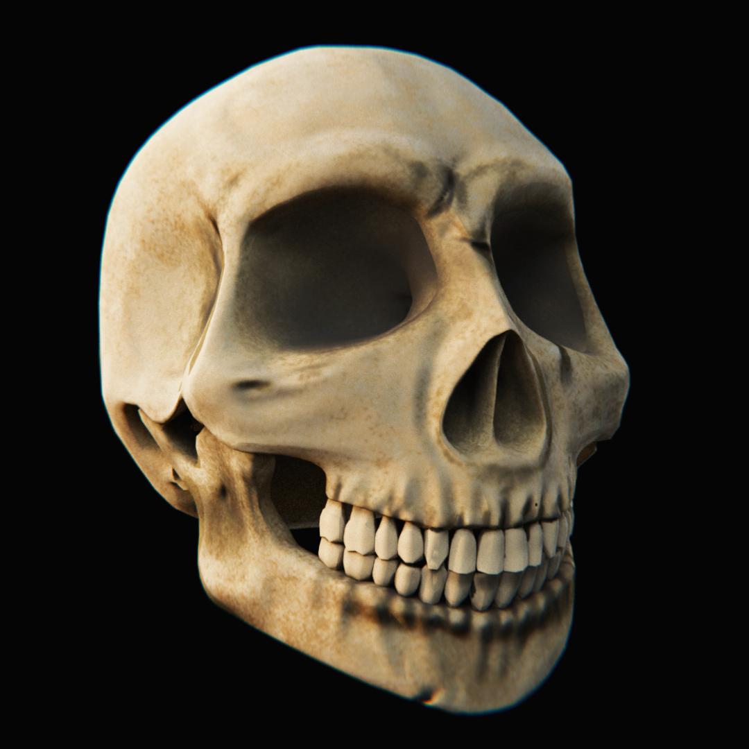 Skull - Blender3D 3D Model in Anatomy 3DExport