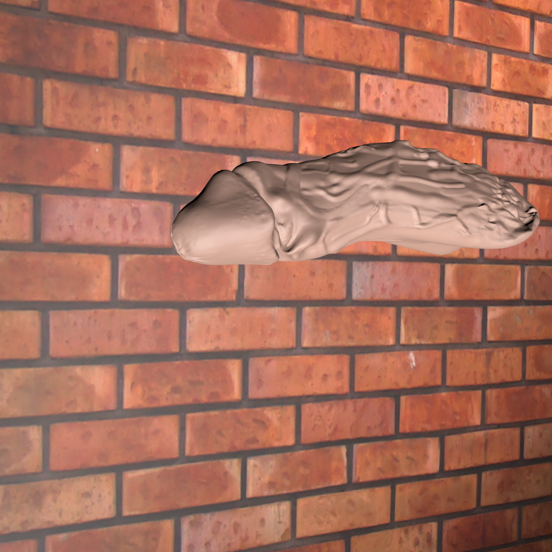 Male penis Modelo 3D in Anatomía 3DExport